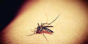 Suzbijanje komaraca provodit će se 23. i 24. srpnja