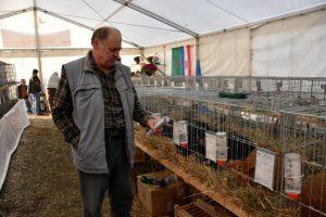 Najava: Izložba malih životinja 15., 16. i 17. studenog